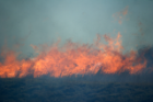 A wildfire burns in the South African savanna. Similar fires are common in the fynbos, an ecologically important belt of shrubland found along the country's southern tip.