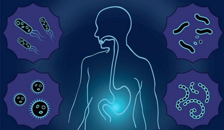 Graphic image of human body outline linking the mouth and gut. Body is surrounded by images of microbes.